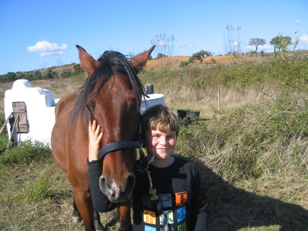 Paard Portugal kind