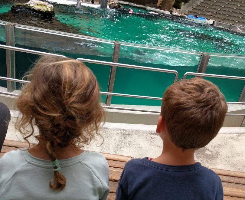 dolfijnen dierentuin