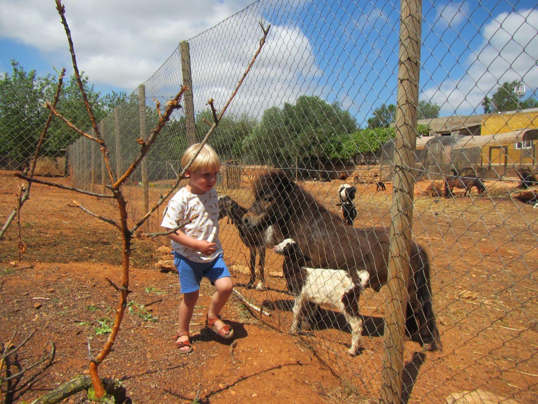 Ibiza dieren