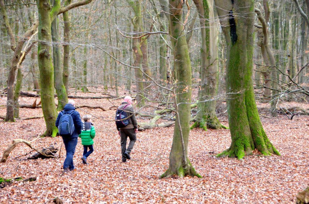 op stap met de boswachter in het Speulderbos