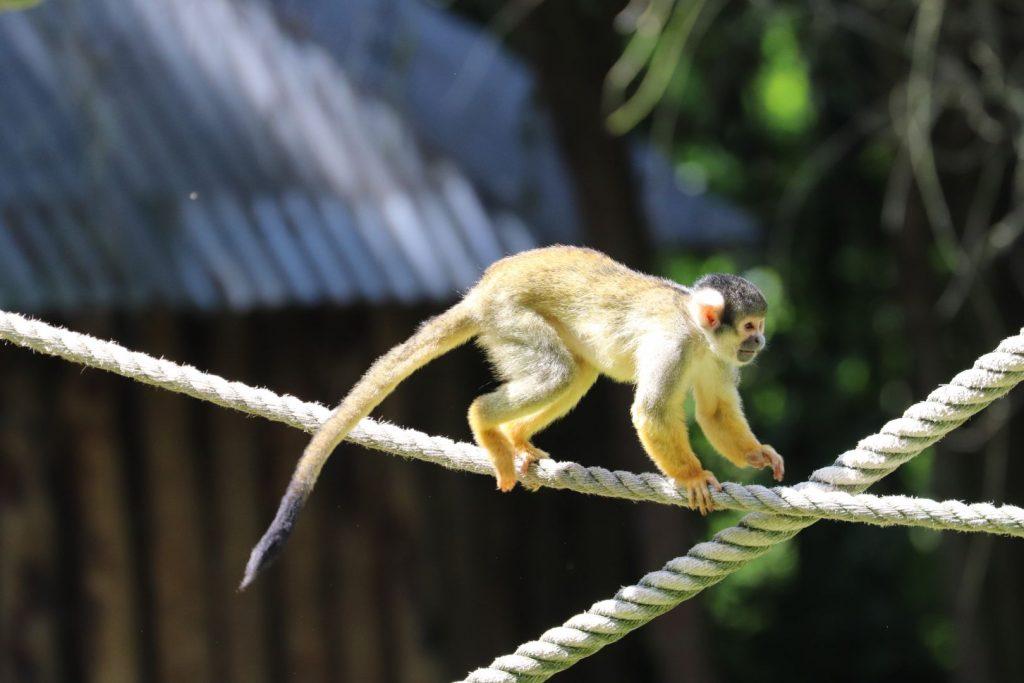 dierentuin Overloon