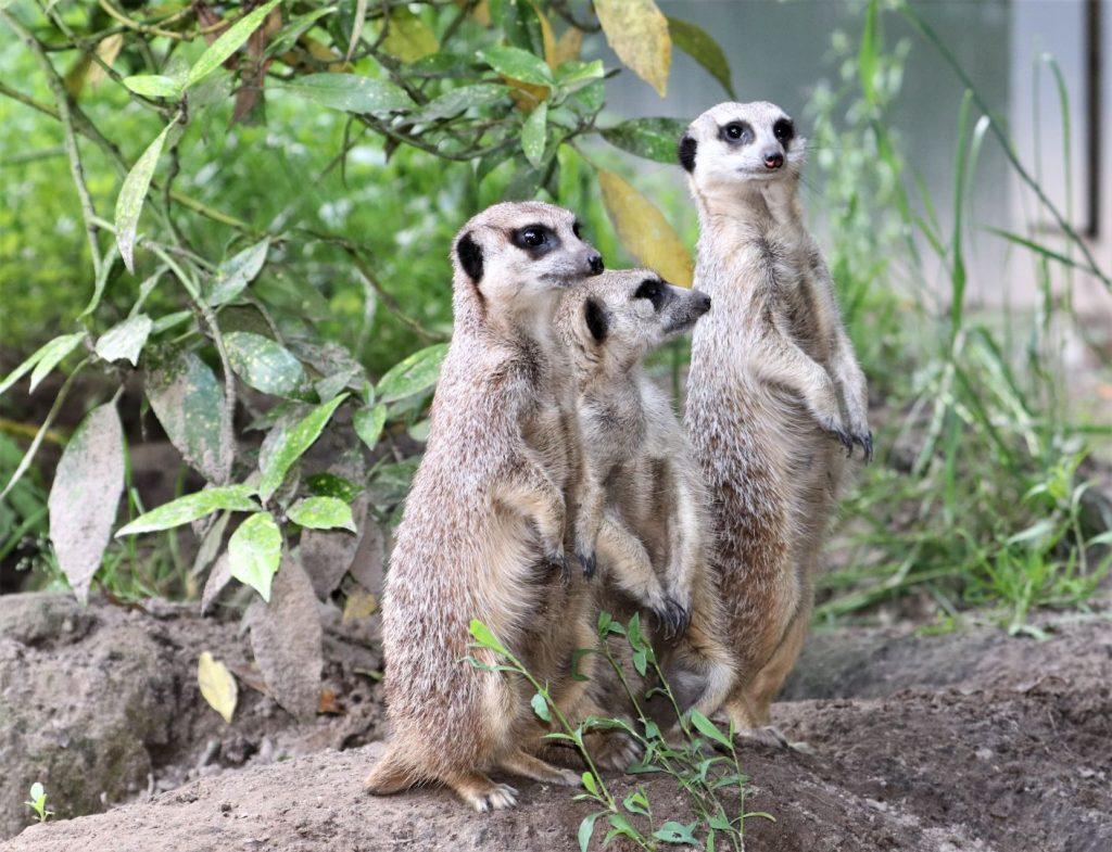 dierenpark Noord-Brabant