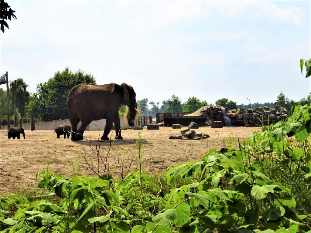 olifanten dierenpark