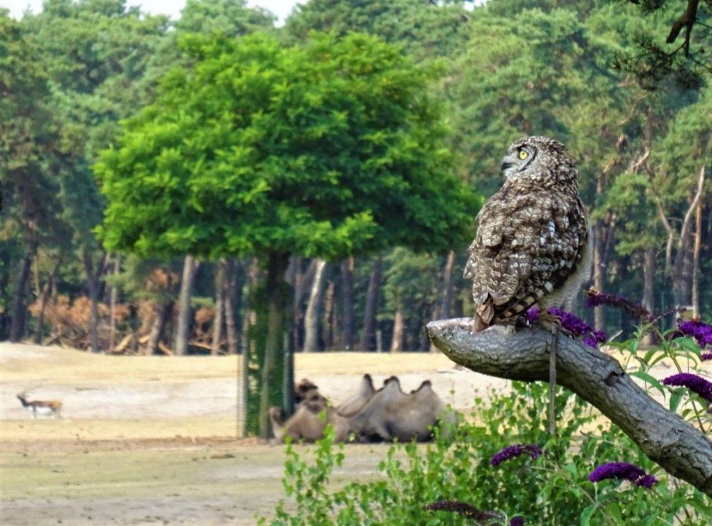 roofvogelsafari