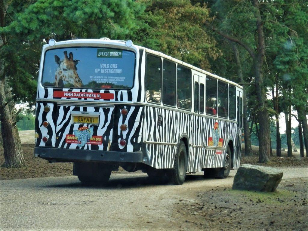 Bussafari