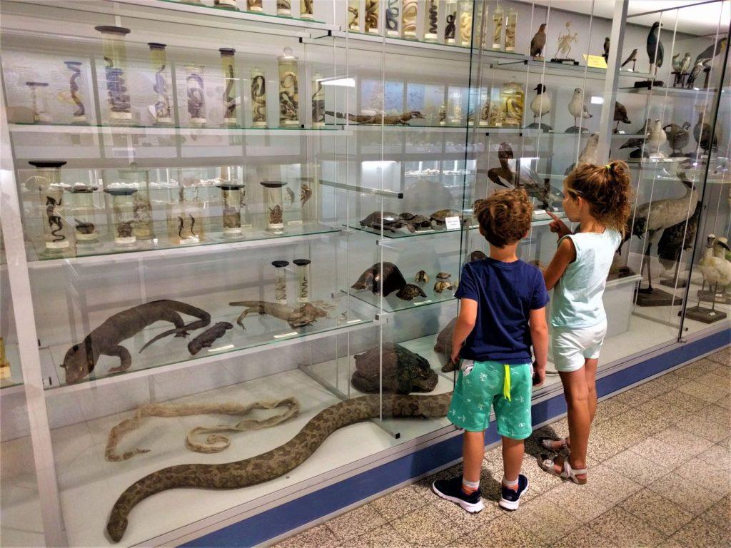 Dierkunde Museum