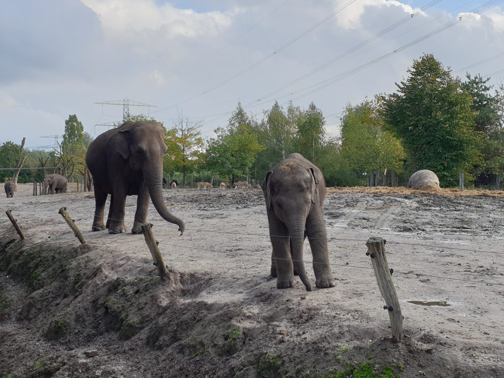 olifanten Noord-Brabant