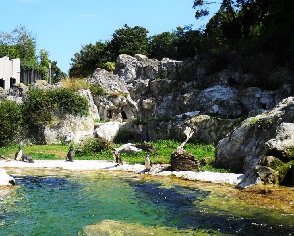 dierentuin Schönbrunn