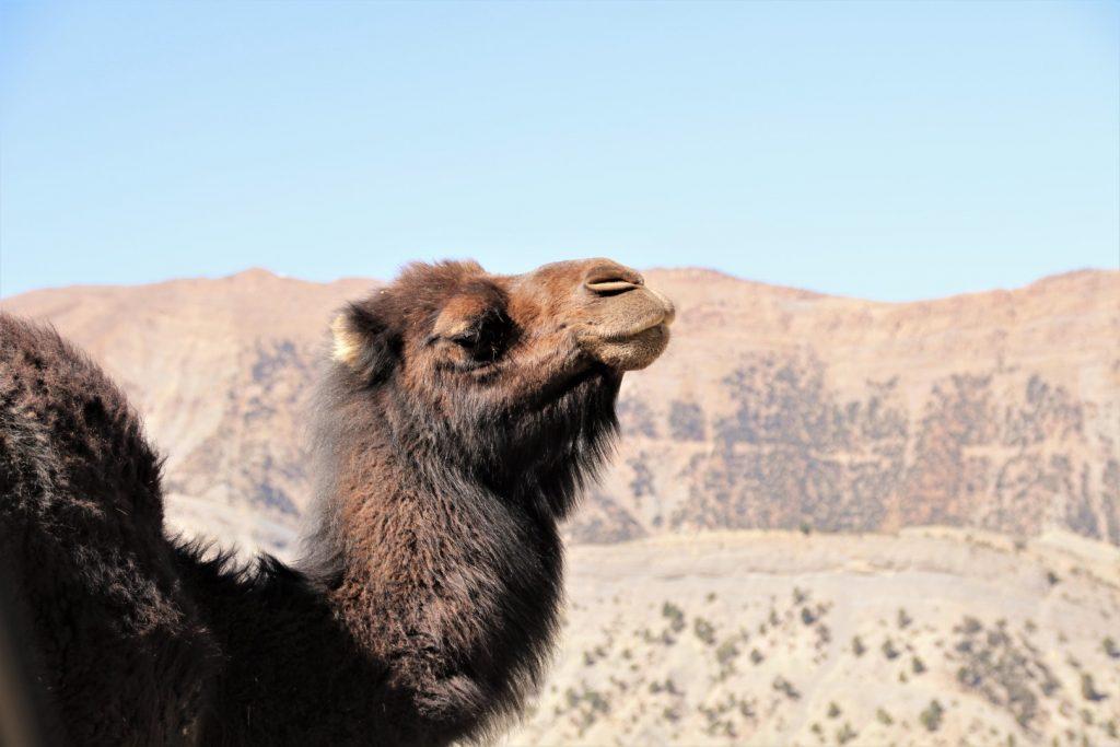 Marokko gezinsvakantie