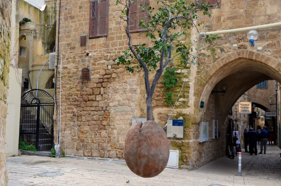 Zwevende sinaasappelboom in Jaffa