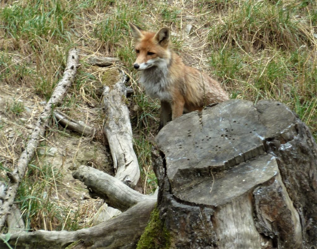 wildtierpark Hessen