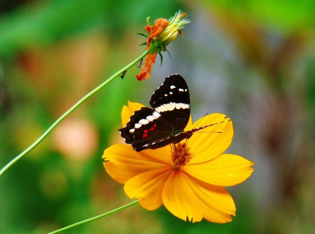 natuur Midden-Amerika